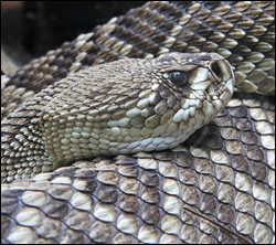 snake removal Garland